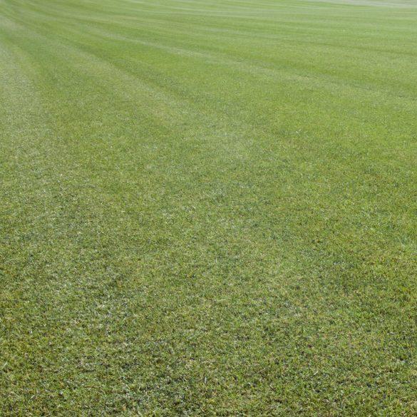 Pannon Grass mediterrán fűmag keverék 10 kg (250nm)